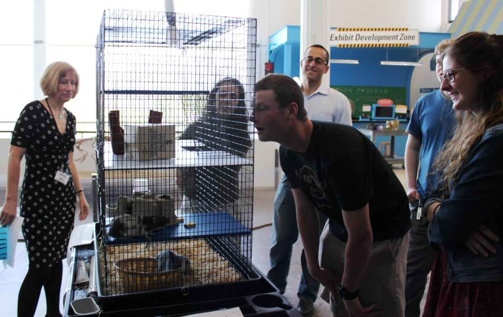 Betsy Loring of the EcoTarium (left) and professor Colin Polsky (third from left) look on as student observe rats that could make up an exhibit